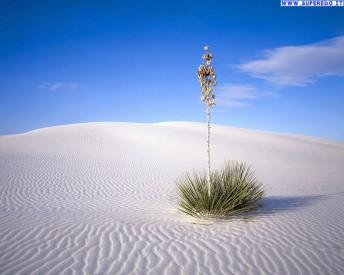 deserto_39