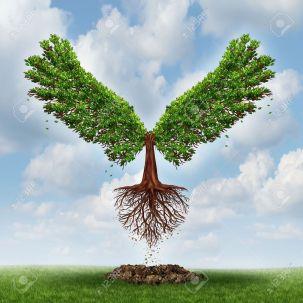 21743114-salendo-e-il-potere-del-successo-con-un-albero-che-cresce-in-forma-di-wingsthat-è-emersa-dalla-terra-e